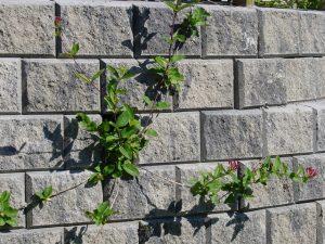 Stablemur i betong